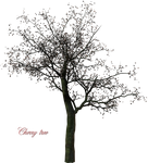 A Cherry Tree png