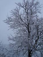 First snow 3.11.09 by dejan91lp