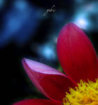 A piece of flower