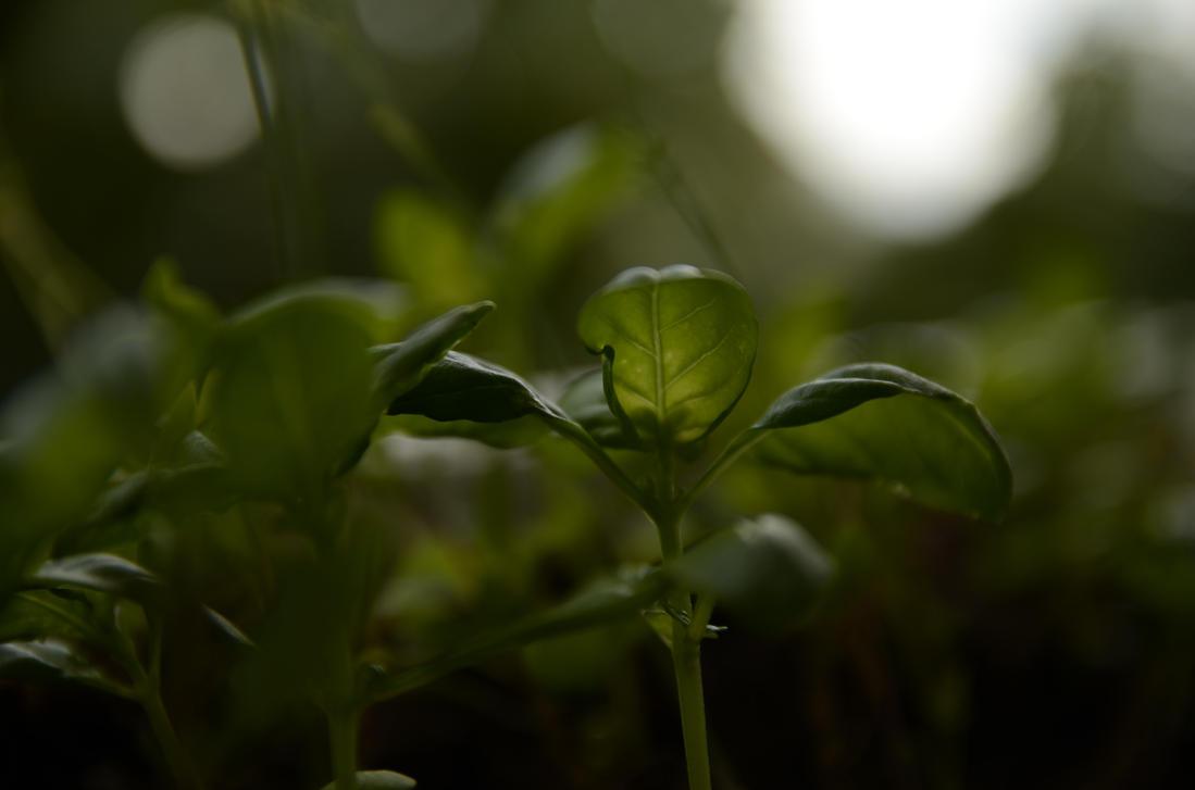 Herb umbrella by jakobhaq