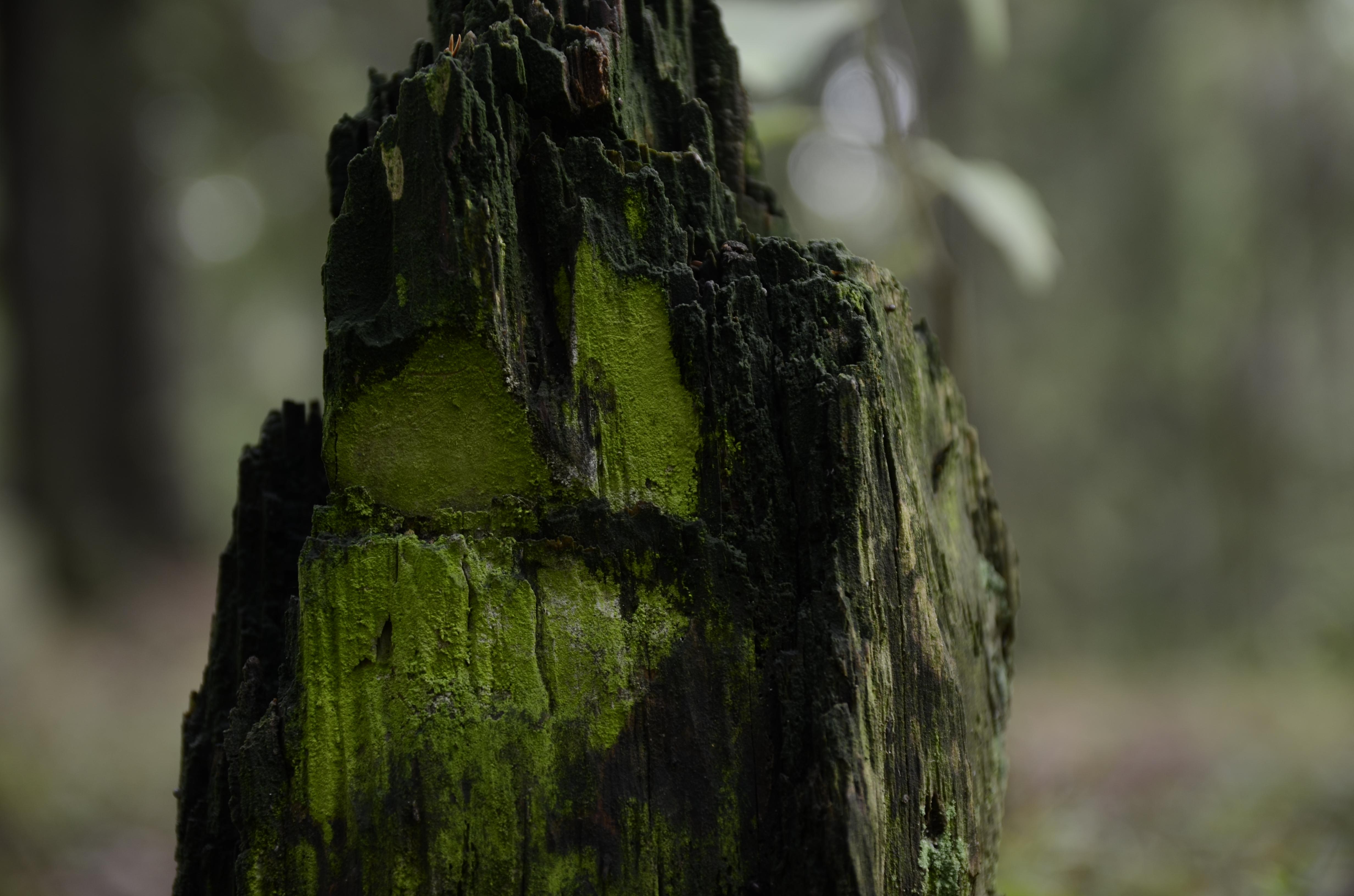 Gnome by jakobhaq