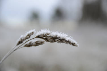 Cold weeds by jakobhaq