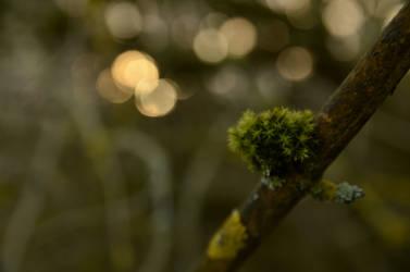 Dawn of Moss by jakobhaq