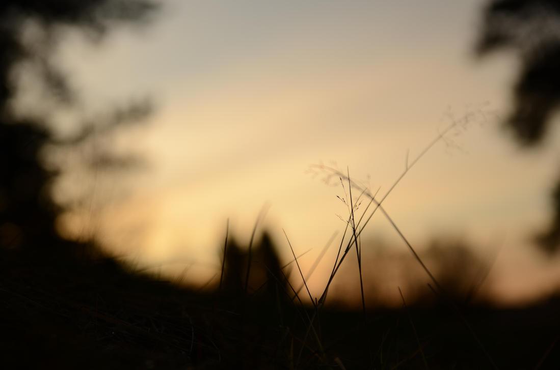 Fox in the shadows by jakobhaq