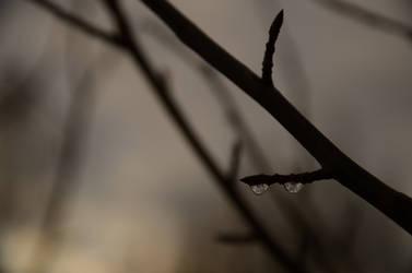 Droplets by jakobhaq