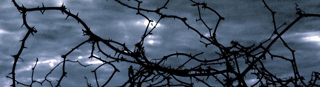 Thorns by SilentBeforeTheStorm