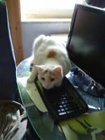 Lying on the Keyboard by Amatao