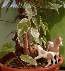 Paint Horses and new Plant