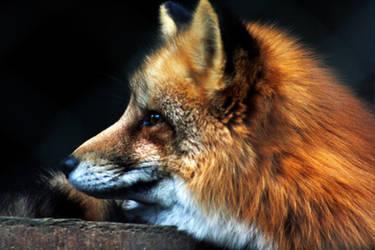 Fox by Suez-H3