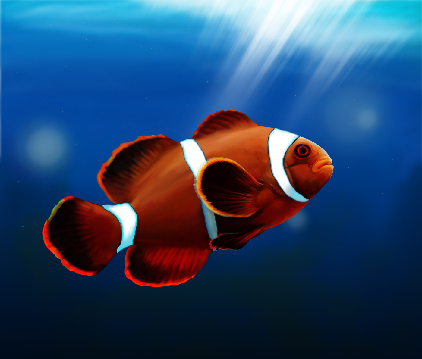 Clown fish by adzign on deviantart for Buy clown fish