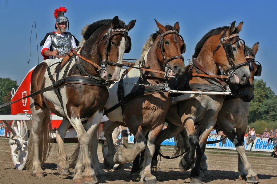 Roman combatdare by arite-stocks