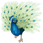 Peacock Pixel by superstar789