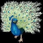 Peacock Pixel by superstar789
