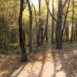 Autumn Lights by druteika