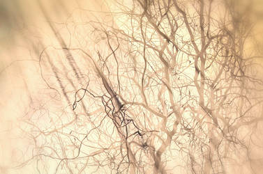 Smoked Willow #4 - Golden by druteika