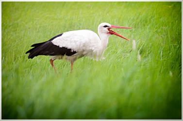 Stork #2 by druteika