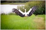 Stork #3 by druteika