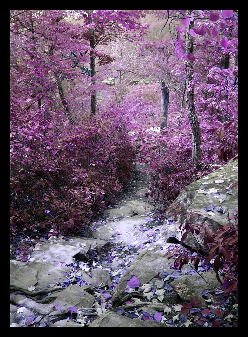 VIOLET - Page 2 Purple_Descent_by_Hallow2