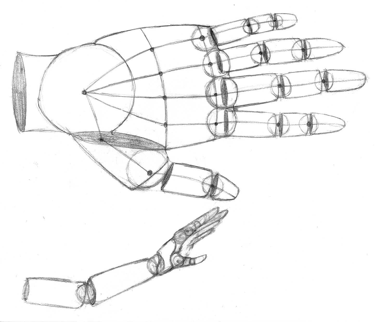 Hand Anatomy Drawing Practice by Age-Solo