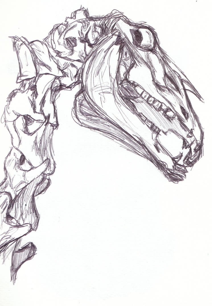 horse skull, reference drawing by Killslay-steelclaw on DeviantArt