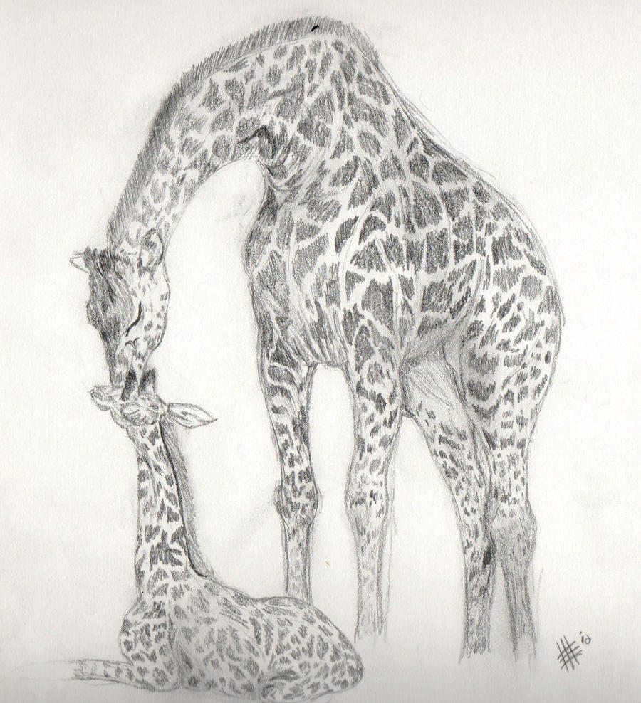 Baby Giraffe And Mom Drawing