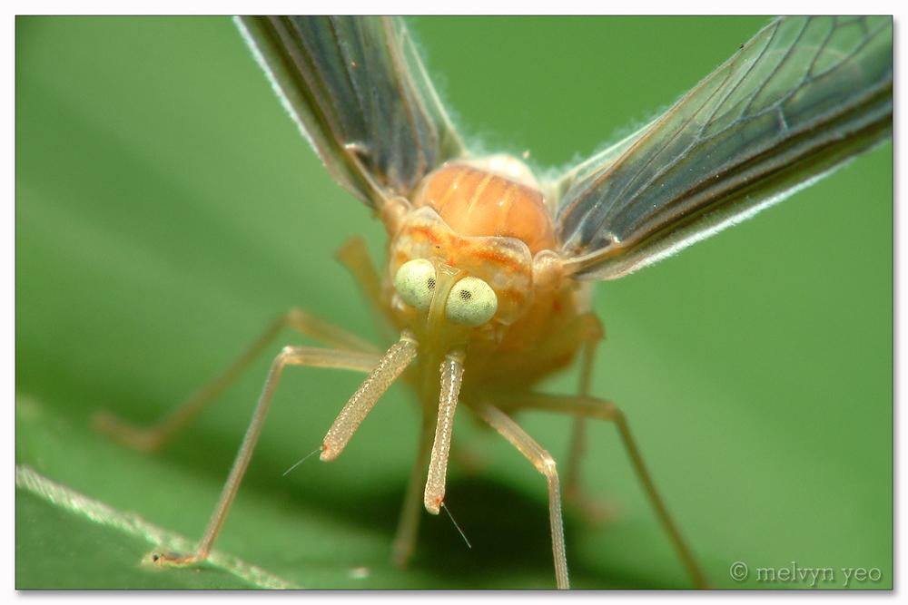 насекомые картинки страшные
