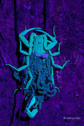 Mama Scorpion UV by melvynyeo