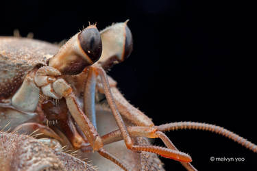 Hermit Crab by melvynyeo