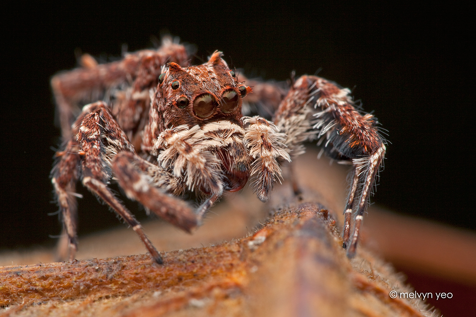 how to keep jumping spiders