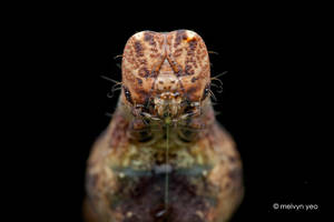 Face off with Caterpillar by melvynyeo