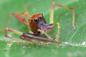 Wide-Jawed Viciria by melvynyeo