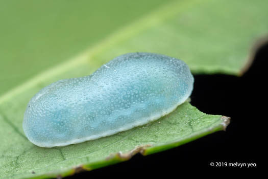 Gelatin Slug Caterpillar by melvynyeo