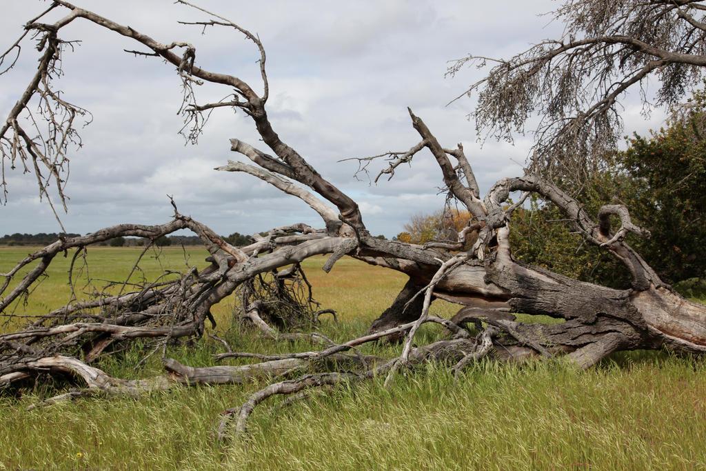 Fallen tree2 by faestock