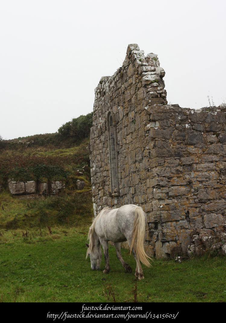 Connemara ponies by faestock