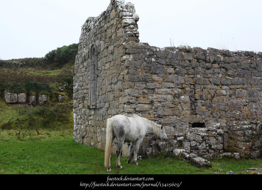 Connemara ponies2 by faestock