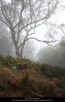 Mist 3 by faestock