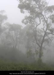 Misty Forest by faestock