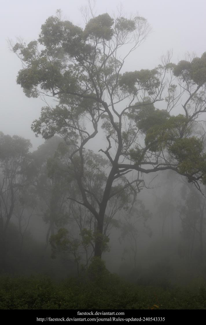 Misty Forest2 by faestock