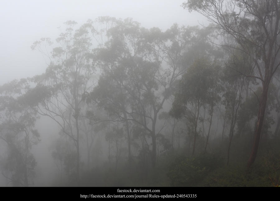 Misty Forest3 by faestock