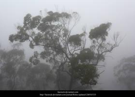 Misty Forest4 by faestock