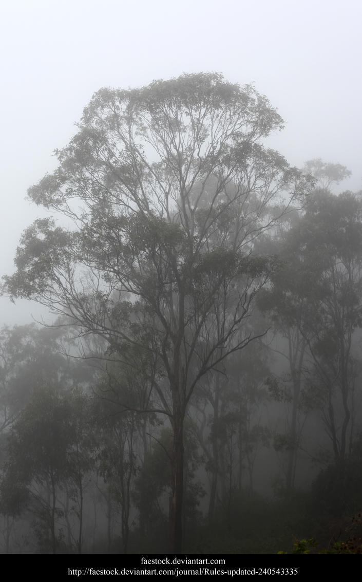 Misty Forest5 by faestock