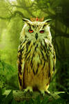 King Owl by Mohammad-GFX