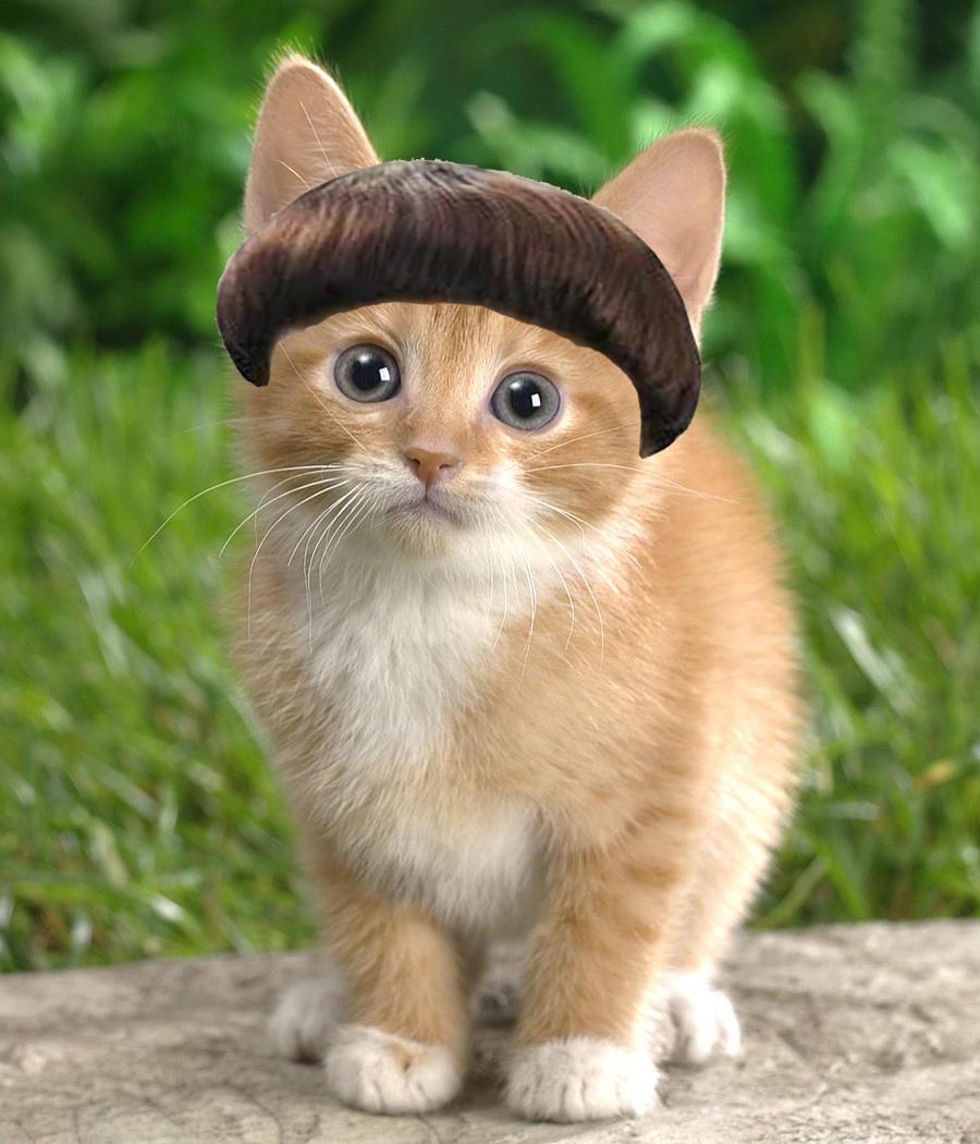 Cute Cat Haircuts