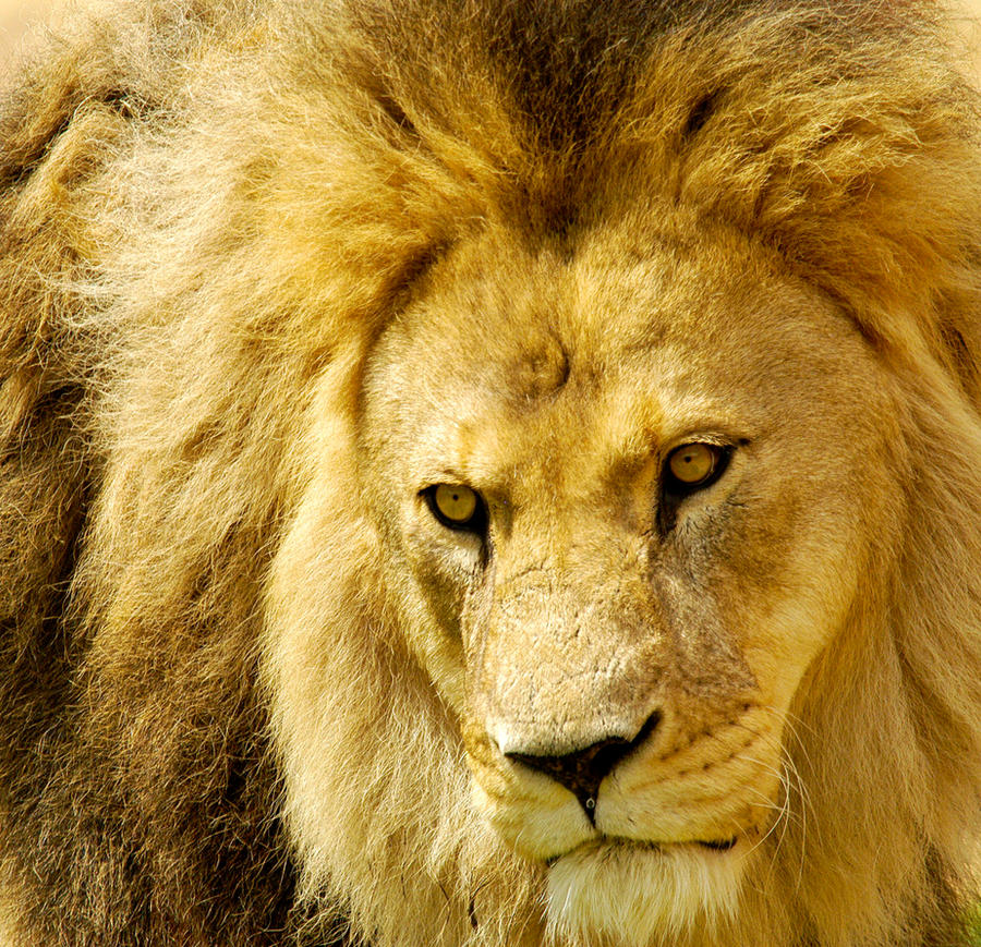 the King by shaunthorpe