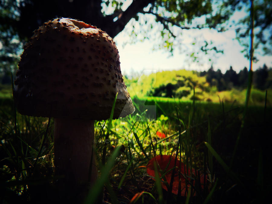 funny lil fungi by a-c-tree