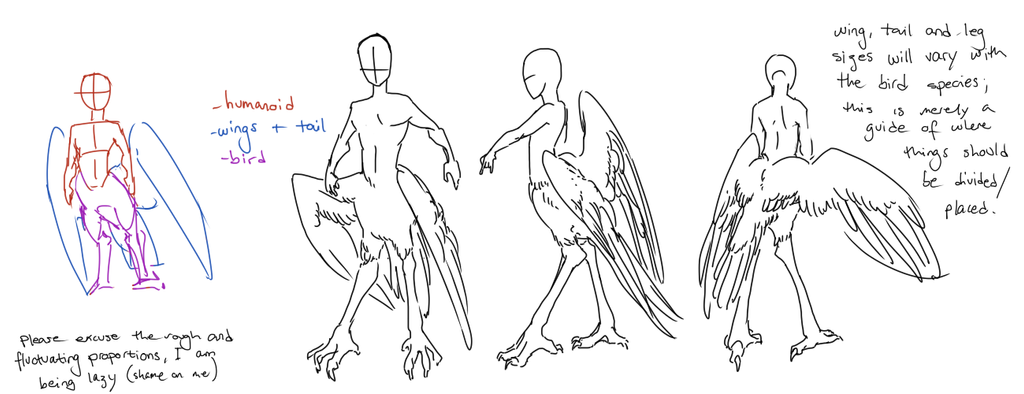 Bird-taur proportions guide by Deericious