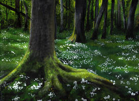 White carpet in the forest by Messingeule