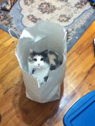 Cat in the Bag by SolarPrincess