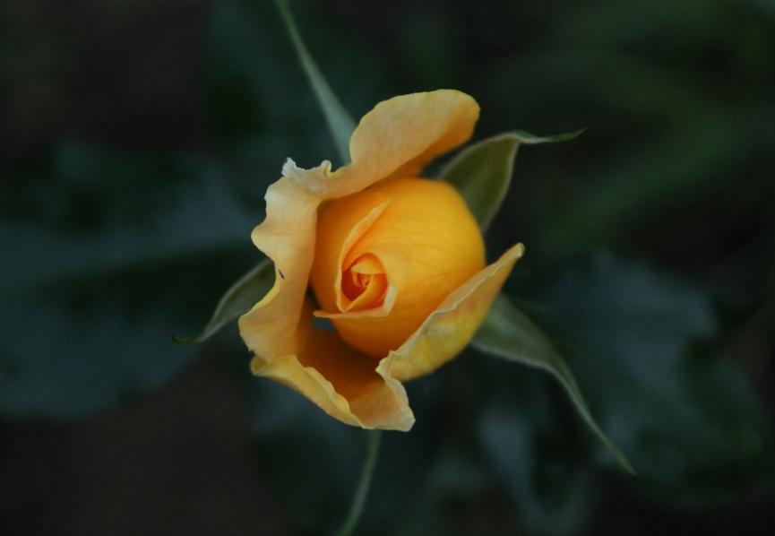 Queen of Garden by Fafim