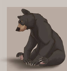 quick Black Bear